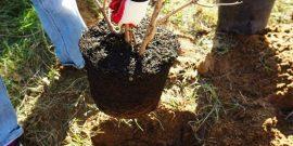 Как выбрать деревья для зимней посадки, чтобы они наверняка пережили холода