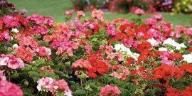 10 цветов, которые надо сеять на рассаду в декабре-январе