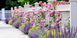 8 советов, которые помогут вырастить лаванду в любом саду
