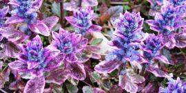 Ленивый сад: 8 красивых цветов, которые расцветут даже без особого ухода
