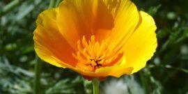 Счастье в дом: 8 растений для сада и дачи, которые притягивают удачу и поднимают настроение