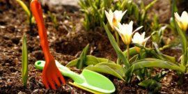 Некогда отдыхать: 8 работ в саду и огороде, которые нужно сделать в апреле