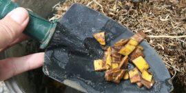 Банановая кожура, луковая шелуха и еще 3 варианта подкормки, от которой томаты будут расти как на дрожжах