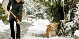 Мартовские заботы дачников: список обязательных дел в саду и на огороде ранней весной