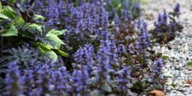 10 цветов для сада, которые не пропадут и без особого ухода
