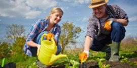 Что делать тем, кто не запасся продуктами и как может спасти огород