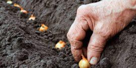 Что посадить на огороде в преддверии кризиса в стране