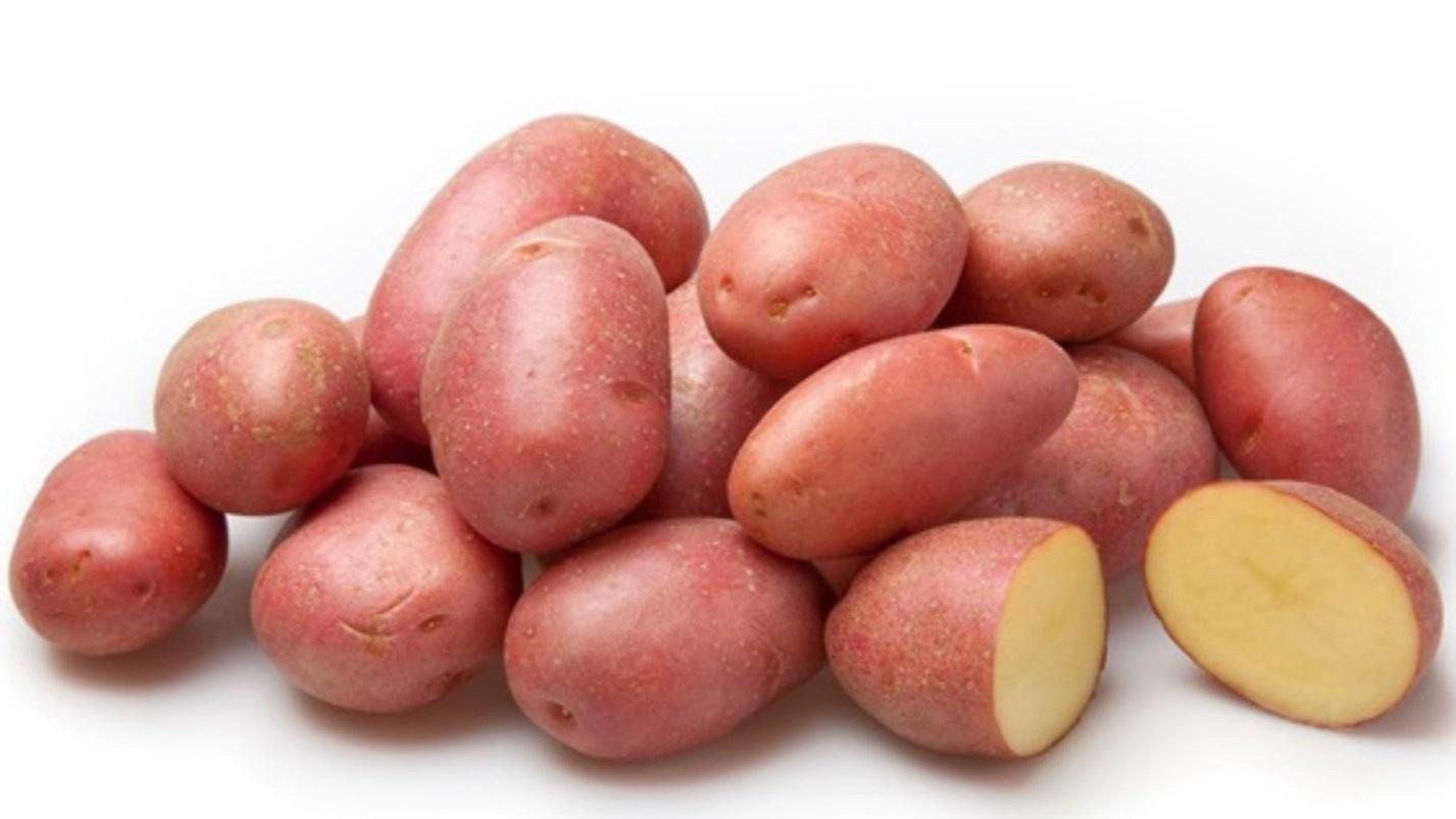 Лучшие среднеранние сорта картофеля для средней полосы России
