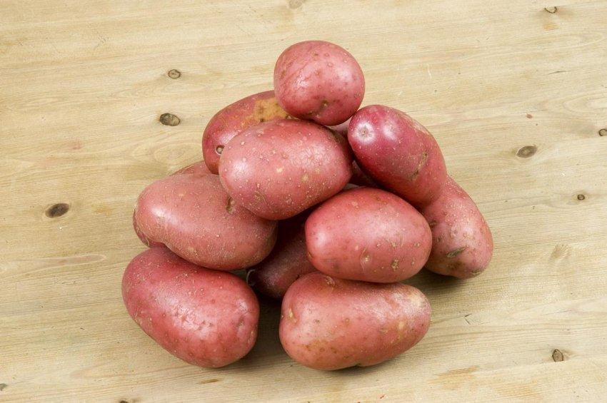 ТОП-3 поздних сортов картофеля для средней полосы России