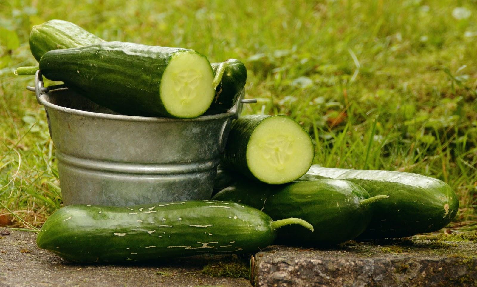 Йод для огурцов: чем полезен, рецепты удобрения, правила подкормки, отзывы и рекомендации