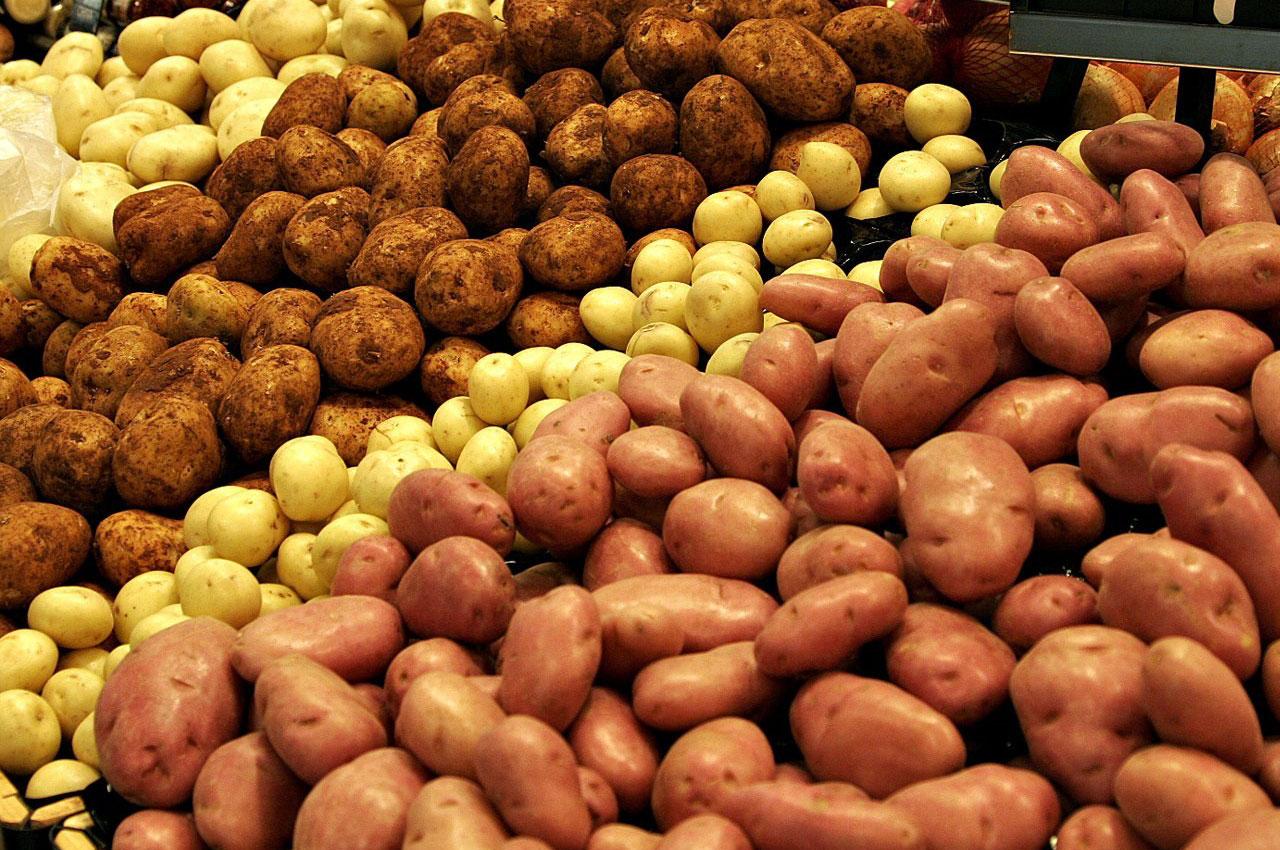 Рейтинг сортов картофеля для средней полосы России: ТОП-10