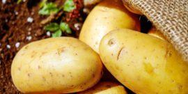 Сорта картофеля для средней полосы России: подробный обзор сортов, правила выращивания и ухода, отзывы, рейтинг лучших